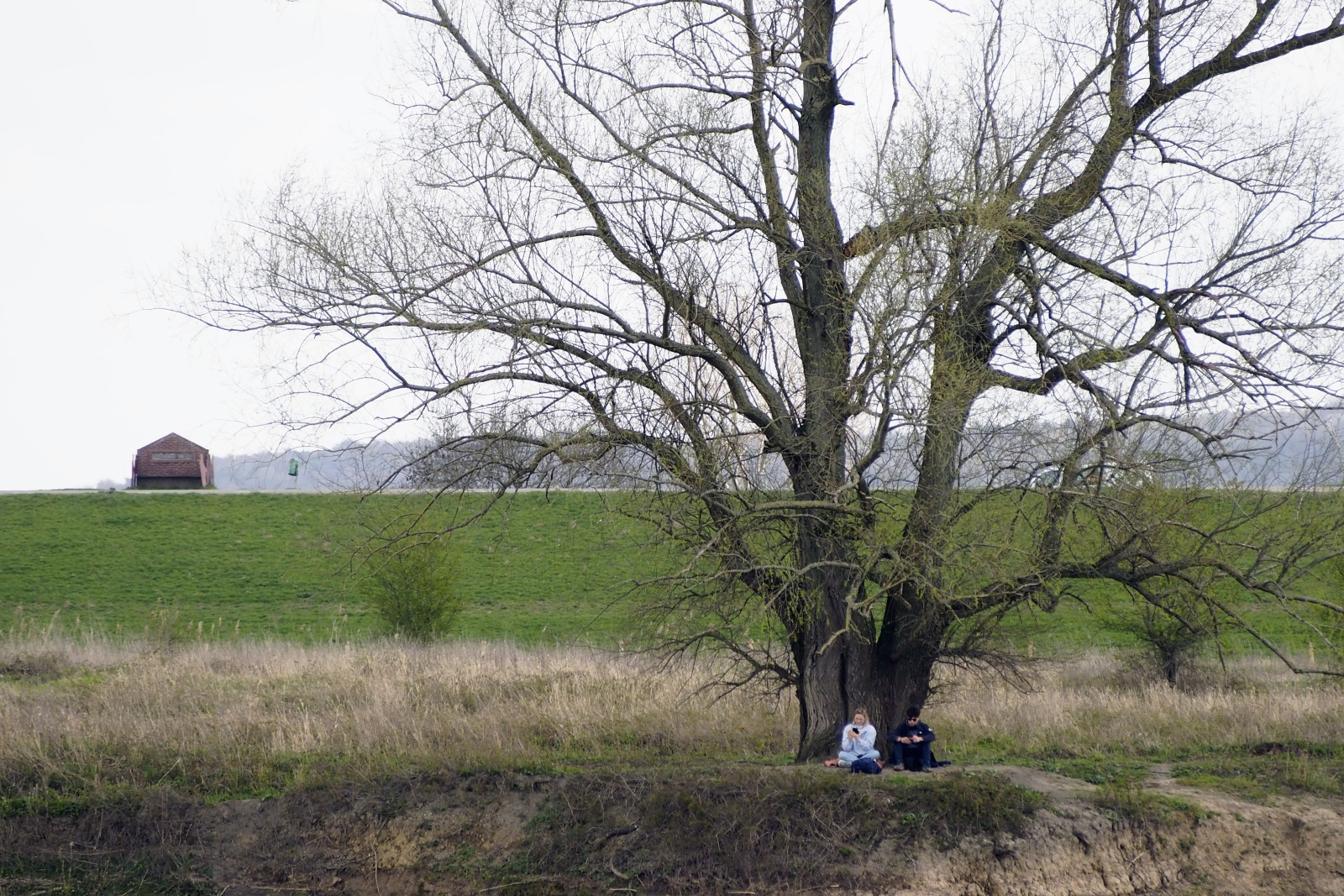 Bisonbaai Ooij Nijmegen